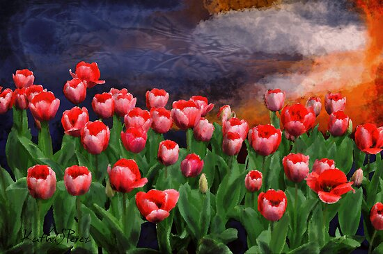Special order Sunset for my tulip garden by KathiSPerez
