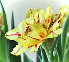 Frilly Tulip by Brenda Boisvert