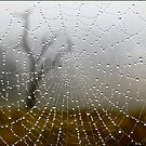 Web View by Lance Leopold