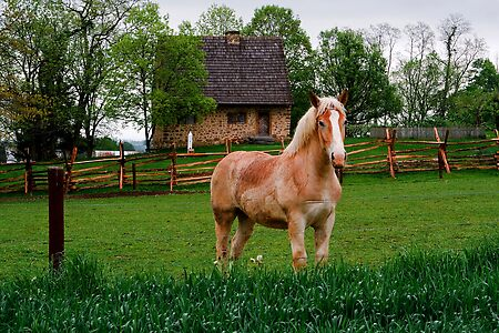 Horse at Hans Herr House