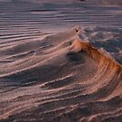 Oceano Dunes at Sunset by Renee D. Miranda