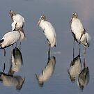 Wood Storks by Maryna Gumenyuk