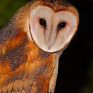 Barn Owl Portrait II by naturalnomad