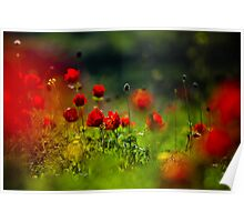 still love poppies Poster