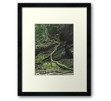 Gnarled Tree Roots - Smoky Mountains Framed Print