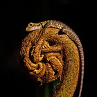 Baby Water Dragon (Physignathus lesueurii lesueurii) on King Fern (Angiopteris evecta) by Normf