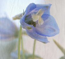 Facing the Delphinium by Lisa Knechtel