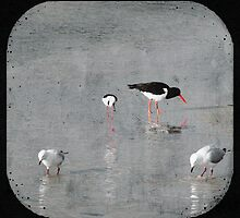 Two Gulls, One Stilt and One Oyster Catcher by pennyswork