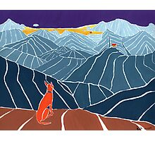 Podenco Dog on a mountain top Photographic Print