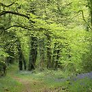 Trees and Woods in Gwent by Jane Corey
