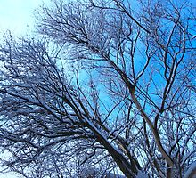 Screeching Winter assaults bare limbs by MarianBendeth