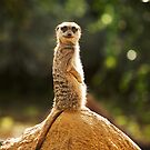 What are you looking at.......! by Paul Moore