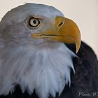 The Proud Eagle by Vinnie  White