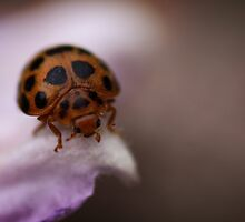 Ladybird on Pink by yolanda