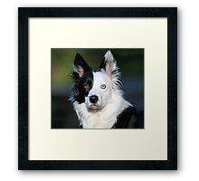 Patch-Border Collie Framed Print