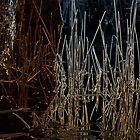 Reeds Goldfields Reservoir by Ian Kemp