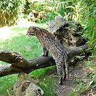 Fishing cat 2 by 29Breizh33