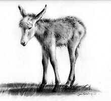 Baby donkey by jan farthing