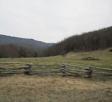Old Fence by Cathy Cale