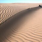 Oceano Dunes Snake by Renee D. Miranda