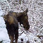 Loose Moose in the snow by amontanaview