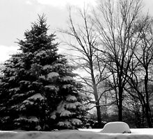 BW Winter Landscape by Tricia Stucenski