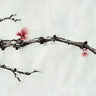 Winter plum flowers by Wieslaw Borkowski