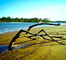 Sand Tree, Flying Fish Point, Nth Queensland by Giovanna Devlin