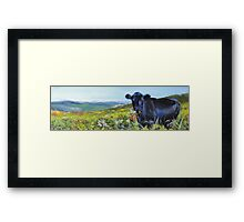 A Lunch Interrupted - Painting of a Dexter Cow Framed Print