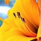 The golden of orange by Cleber Photography Design