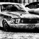 Mustang 2 - Newark , Texas by jphall
