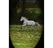 Just having a gallop Photographic Print
