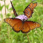 Butterfly ~ Trio of Queens by Kimberly P-Chadwick