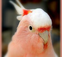 Pretty In Pink by artisandelimage