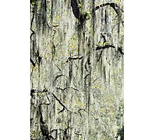 Moss Forest Photographic Print