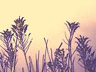Dawn of Spring by MarjorieB