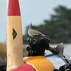 Pre flight by Shaun O'Malley