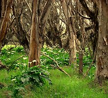 Capel Cemetery Grounds WesternAustralia by ZanaPearce73