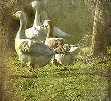 A Wild Goose Chase by Chris Armytage™