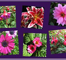 Pink Summer Flowers Collage on Purple Background by BlueMoonRose