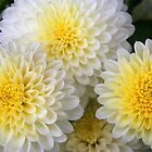 Mums in Yellow and White by Laurel Talabere