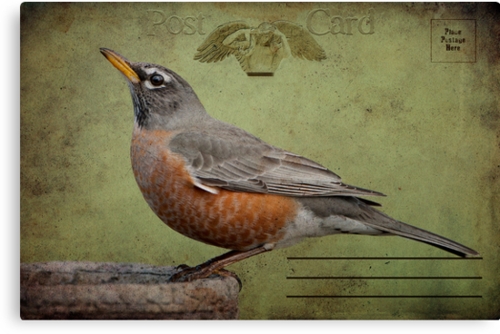 Vintage Robin Postcard by Bonnie T.  Barry