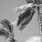Coconut Palms In Wind - Grenada by Lorna81