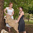 Fun With Sheep by Malcolm Katon
