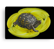 Box Turtle on Lily Canvas Print
