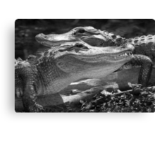 """Happy Gators"" - alligators in the Florida Everglades Canvas Print"