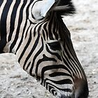 What's Black and White by bozette