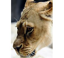 Queen of the Pride Photographic Print