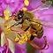 Bumble Bee's Challenge