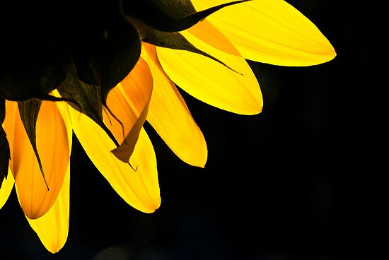 Yellow on Black by Karen Havenaar